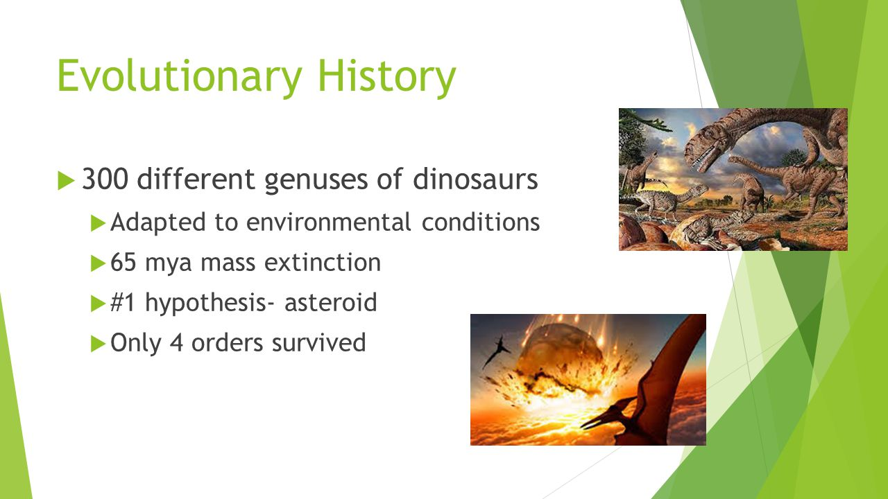 Evolutionary History 300 different genuses of dinosaurs