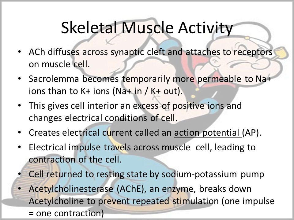 Skeletal Muscle Activity