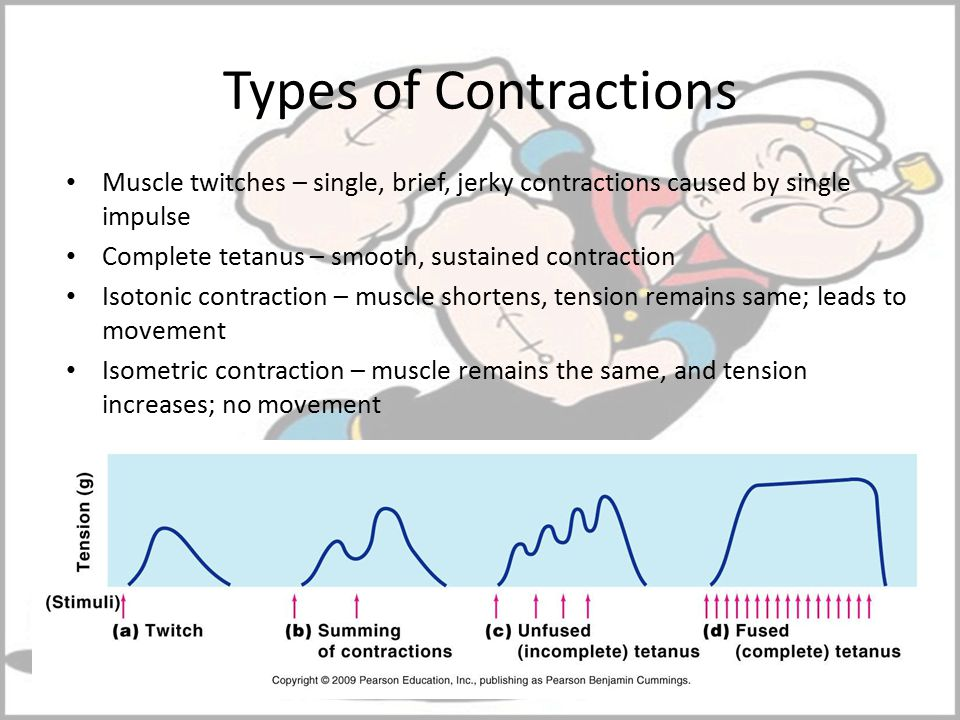 Types of Contractions Muscle twitches – single, brief, jerky contractions caused by single impulse.
