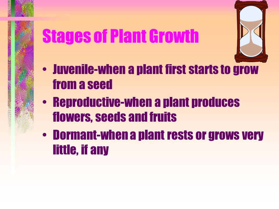 Stages of Plant Growth Juvenile-when a plant first starts to grow from a seed. Reproductive-when a plant produces flowers, seeds and fruits.