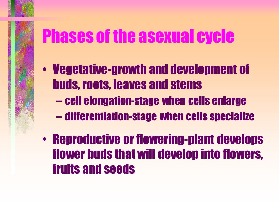 Phases of the asexual cycle