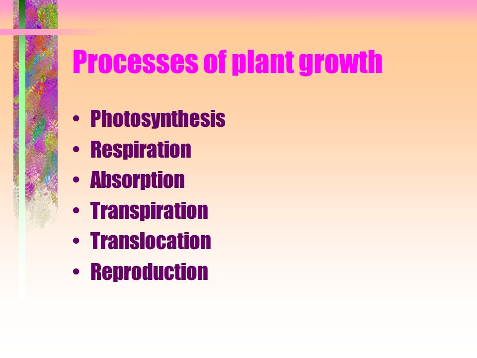 Processes of plant growth