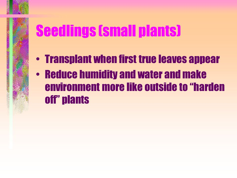 Seedlings (small plants)