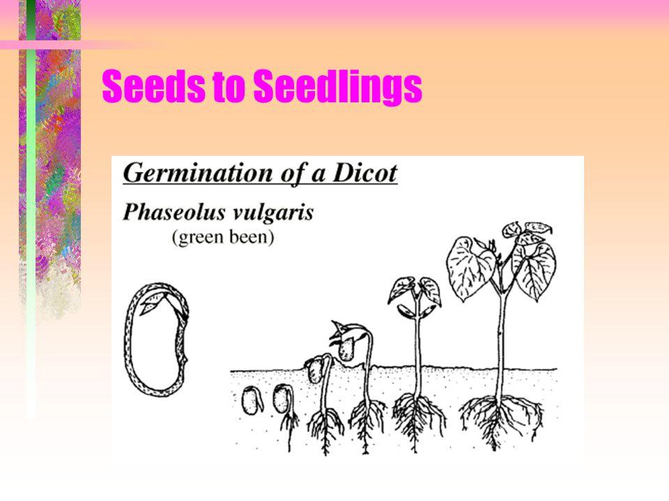 Seeds to Seedlings