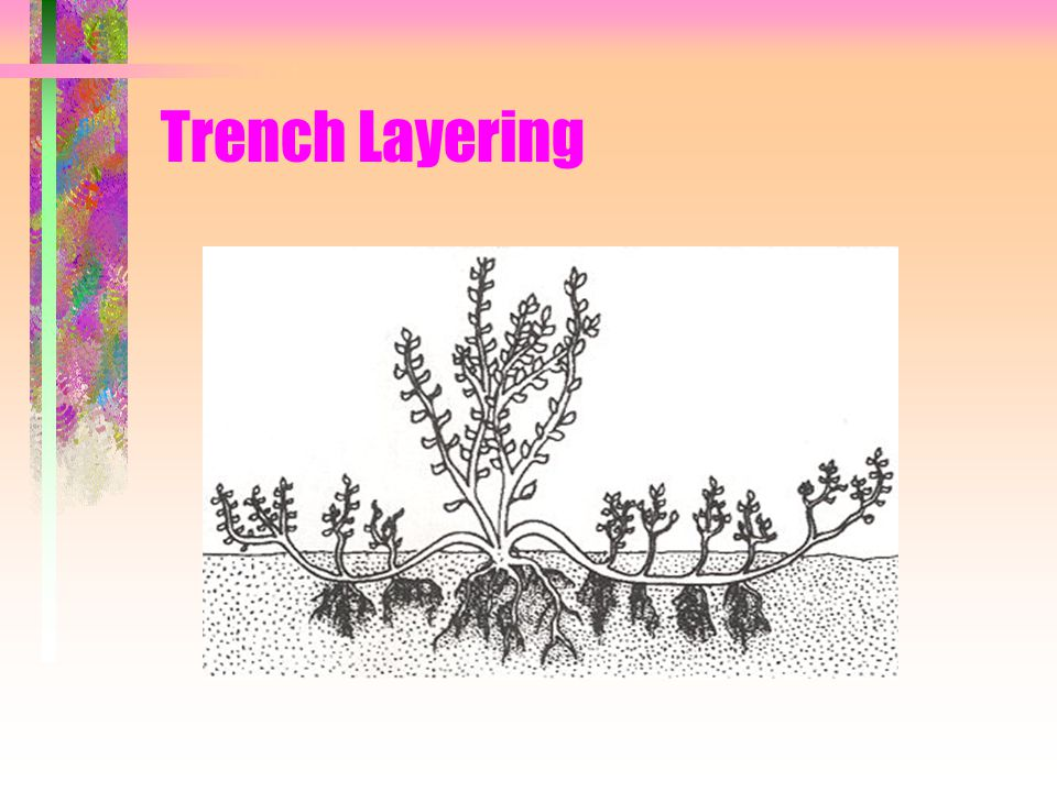 Trench Layering