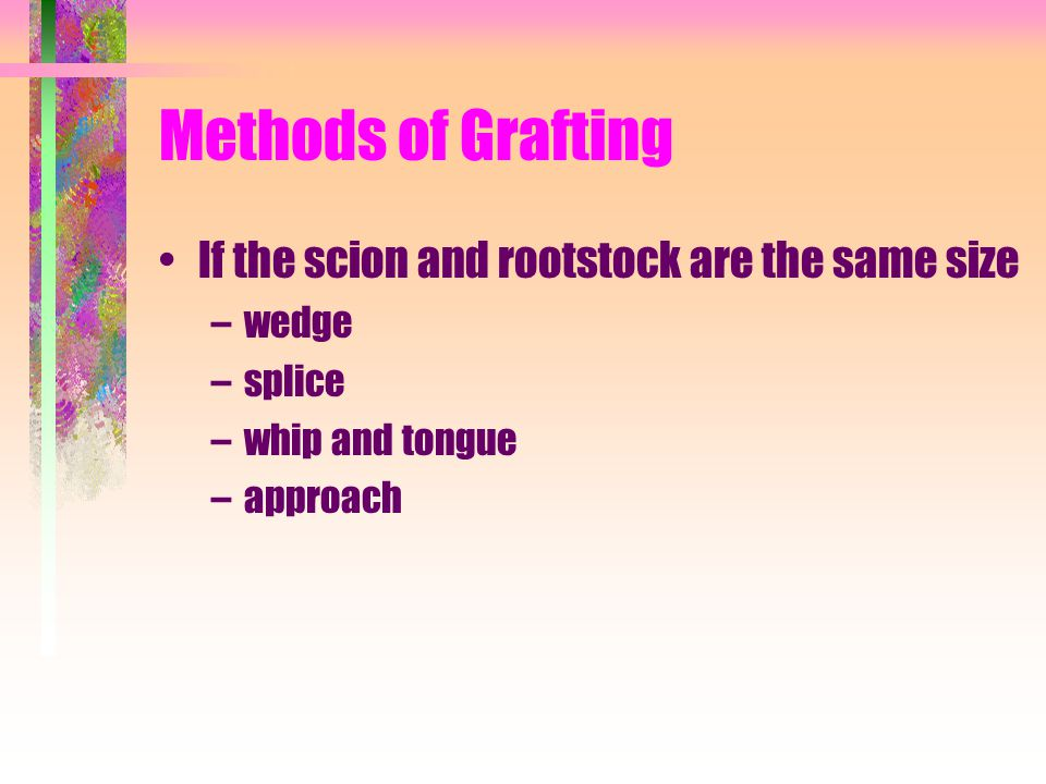 Methods of Grafting If the scion and rootstock are the same size wedge