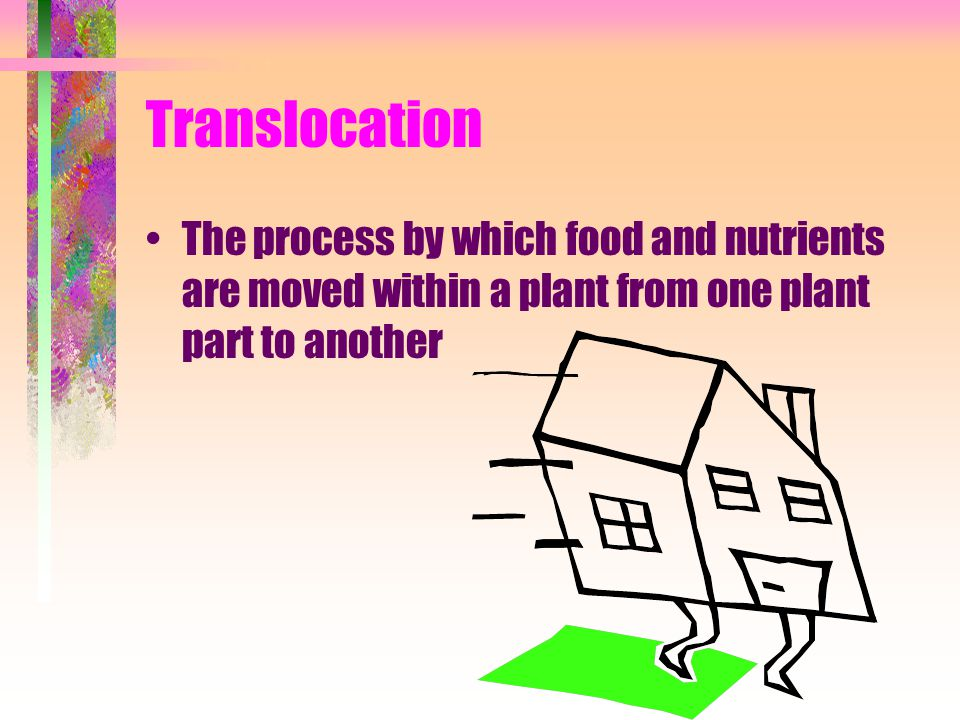 Translocation The process by which food and nutrients are moved within a plant from one plant part to another.