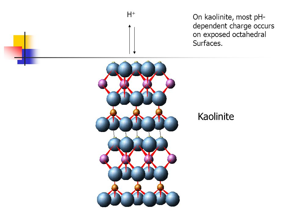Kaolinite H+ On kaolinite, most pH- dependent charge occurs