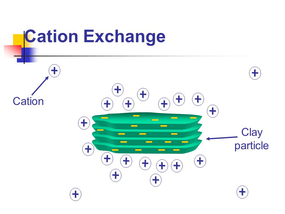 Cation Exchange Cation Clay particle