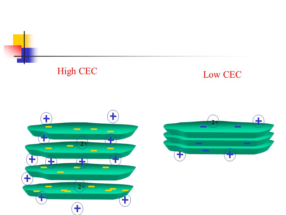 High CEC Low CEC 2+ 2+ 2+