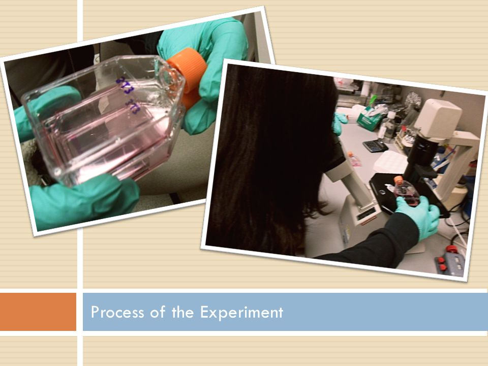 Process of the Experiment