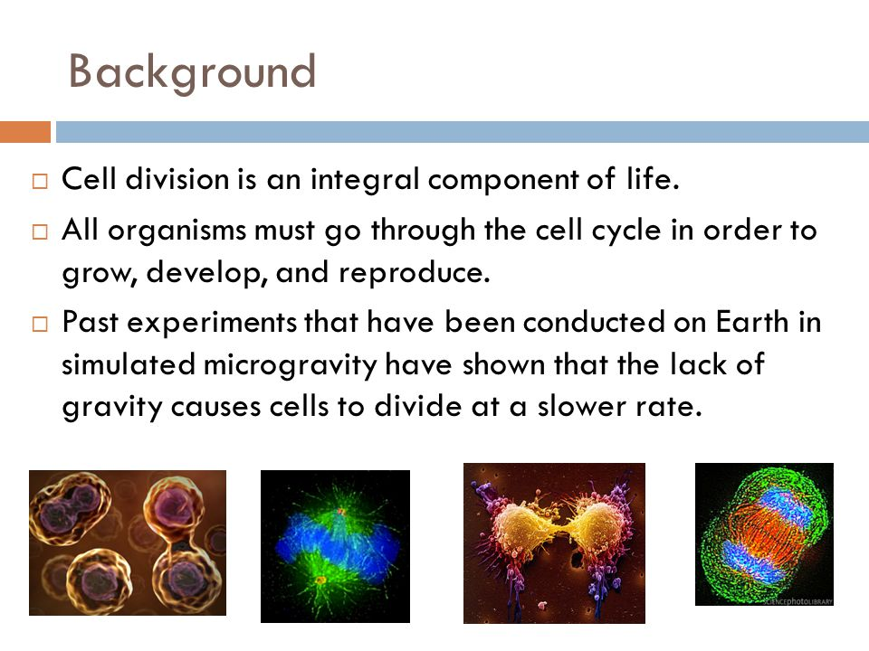 Background Cell division is an integral component of life.