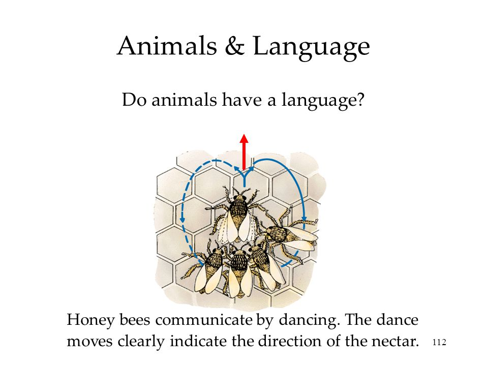 Do animals have a language