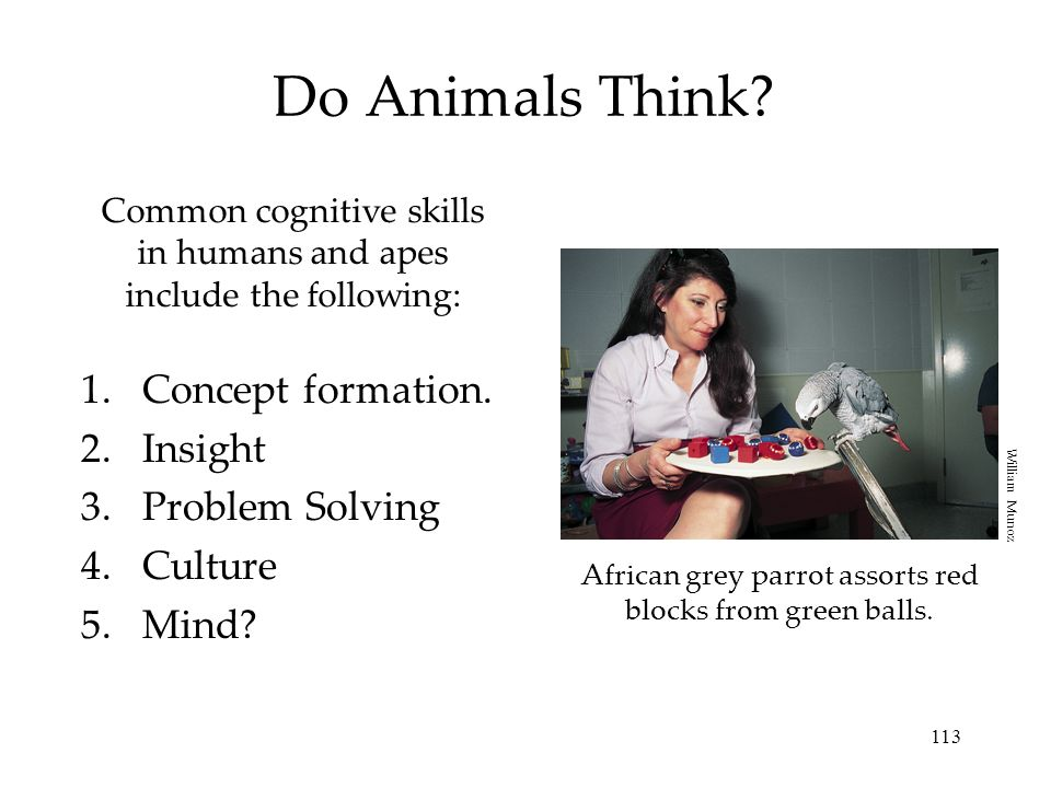 Do Animals Think Concept formation. Insight Problem Solving Culture