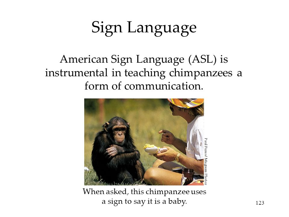 When asked, this chimpanzee uses