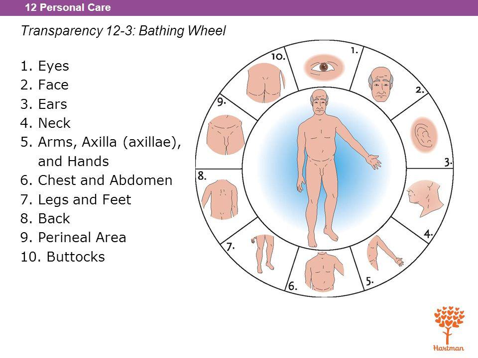 Transparency 12-3: Bathing Wheel