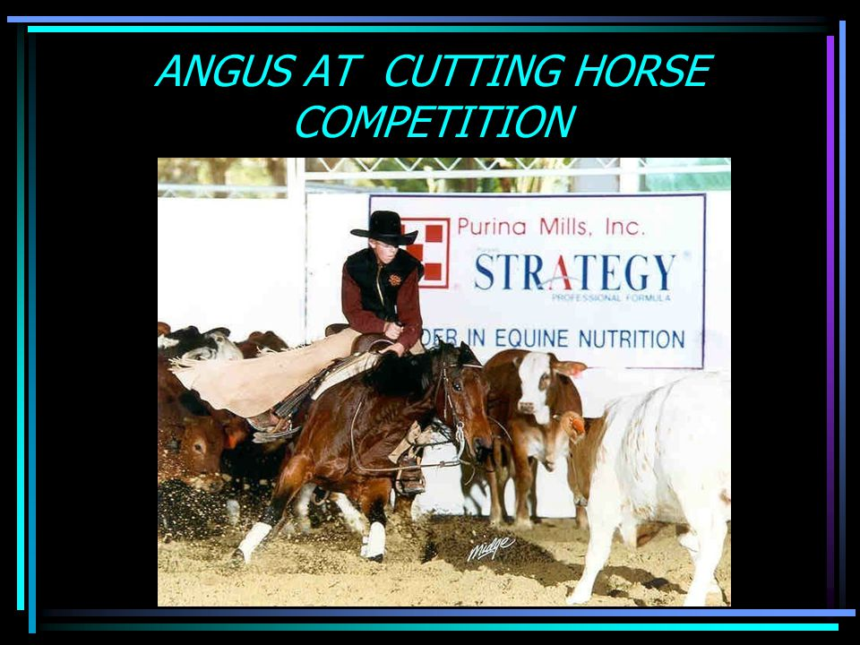 ANGUS AT CUTTING HORSE COMPETITION