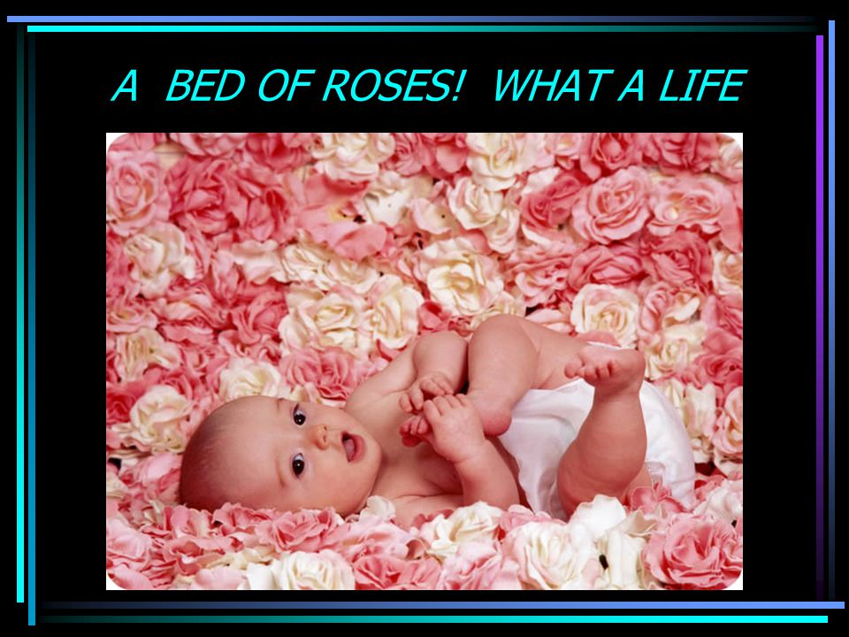 A BED OF ROSES! WHAT A LIFE