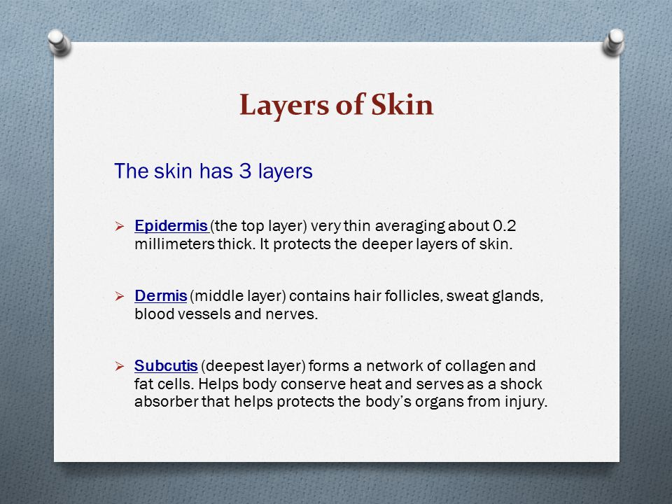 Layers of Skin The skin has 3 layers