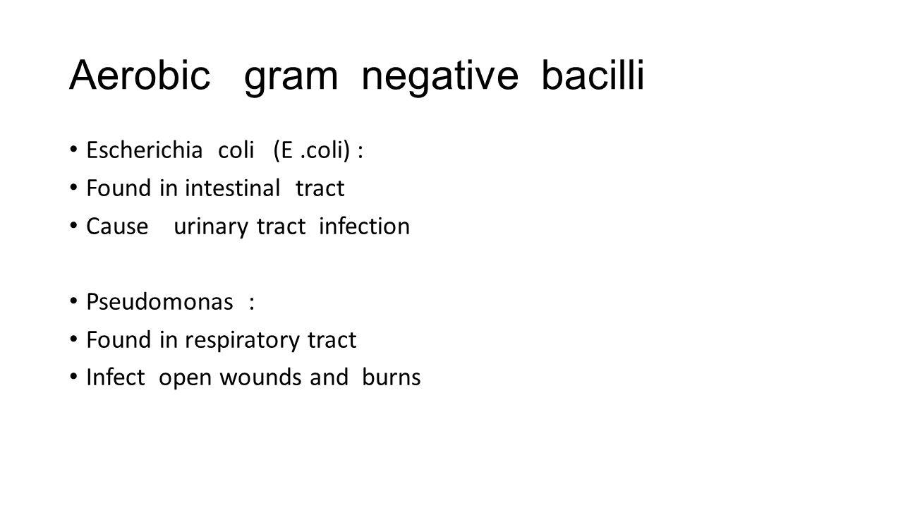 Aerobic gram negative bacilli