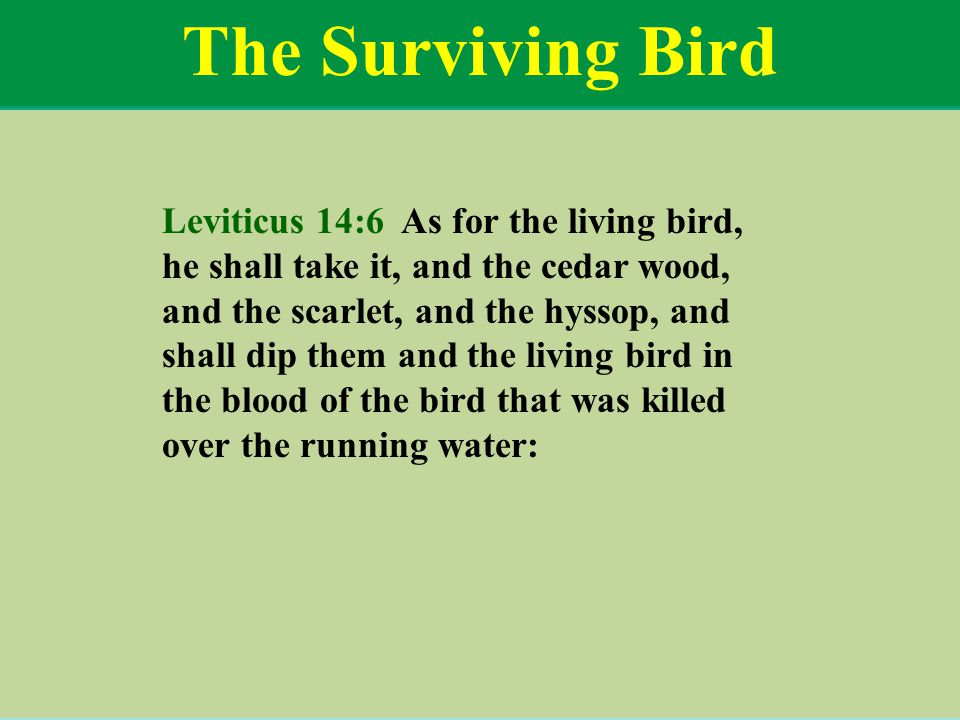 The Surviving Bird