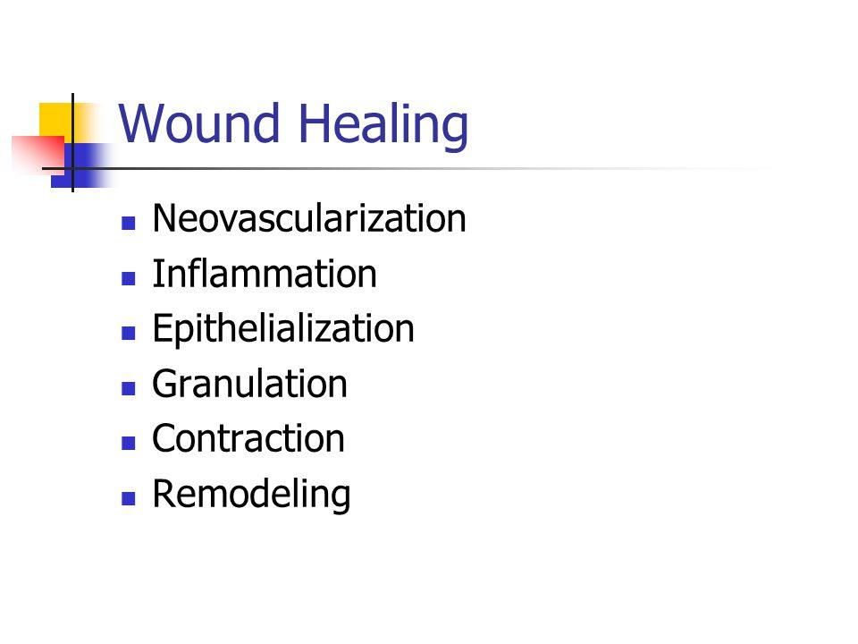 Wound Healing Neovascularization Inflammation Epithelialization