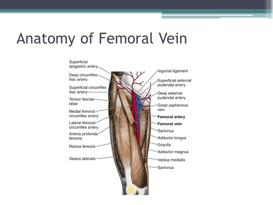 Anatomy of Femoral Vein