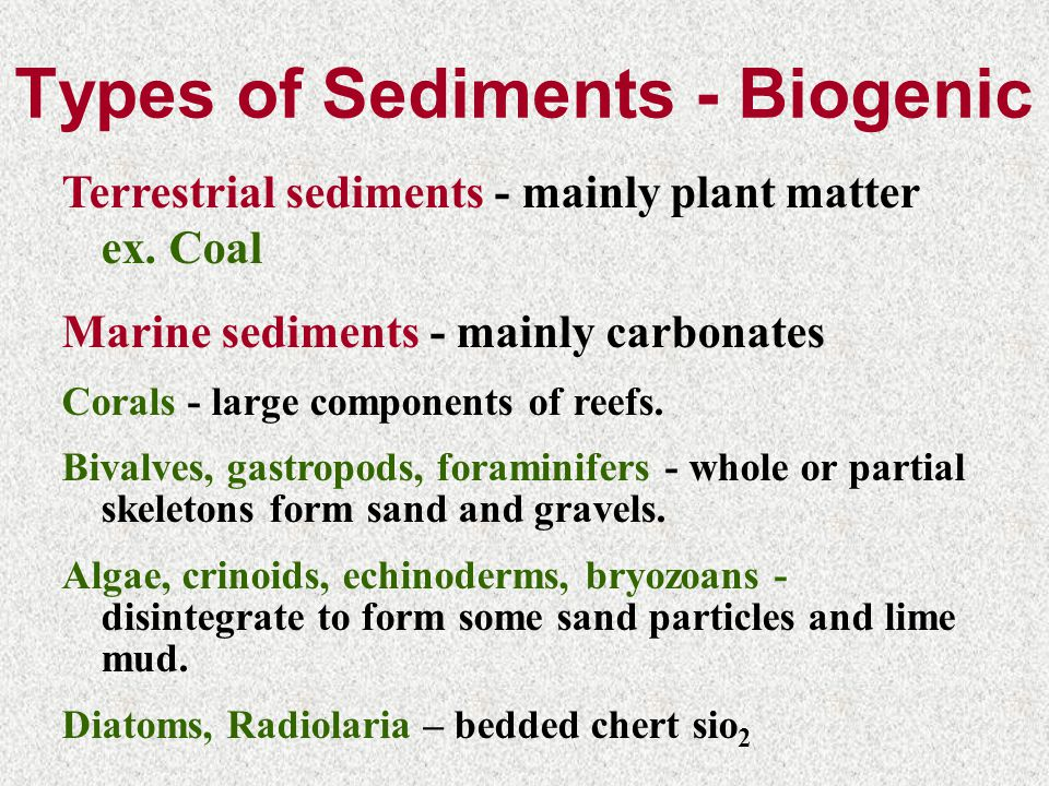 Types of Sediments - Biogenic