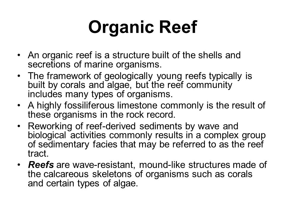Organic Reef An organic reef is a structure built of the shells and secretions of marine organisms.