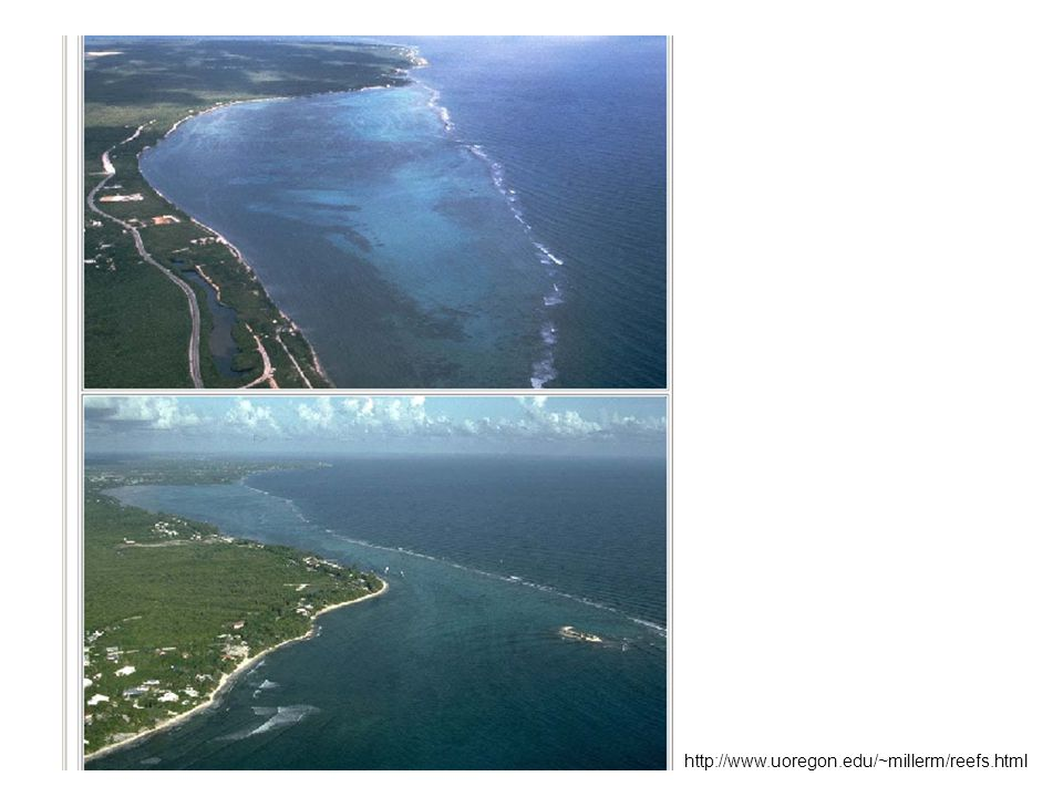 http://www.uoregon.edu/~millerm/reefs.html