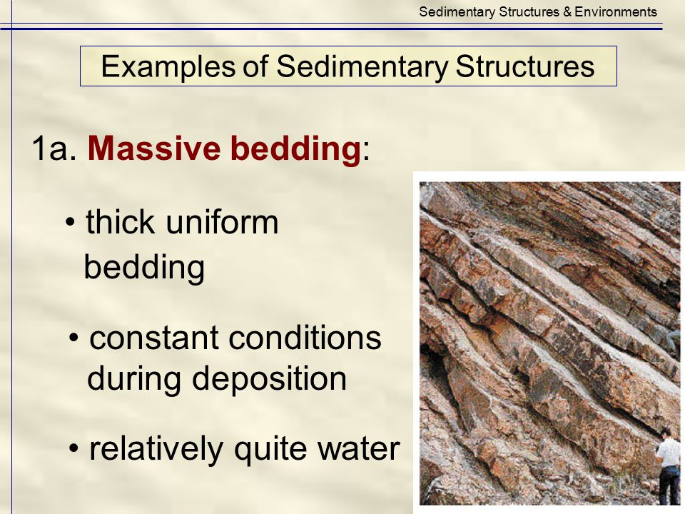 Examples of Sedimentary Structures