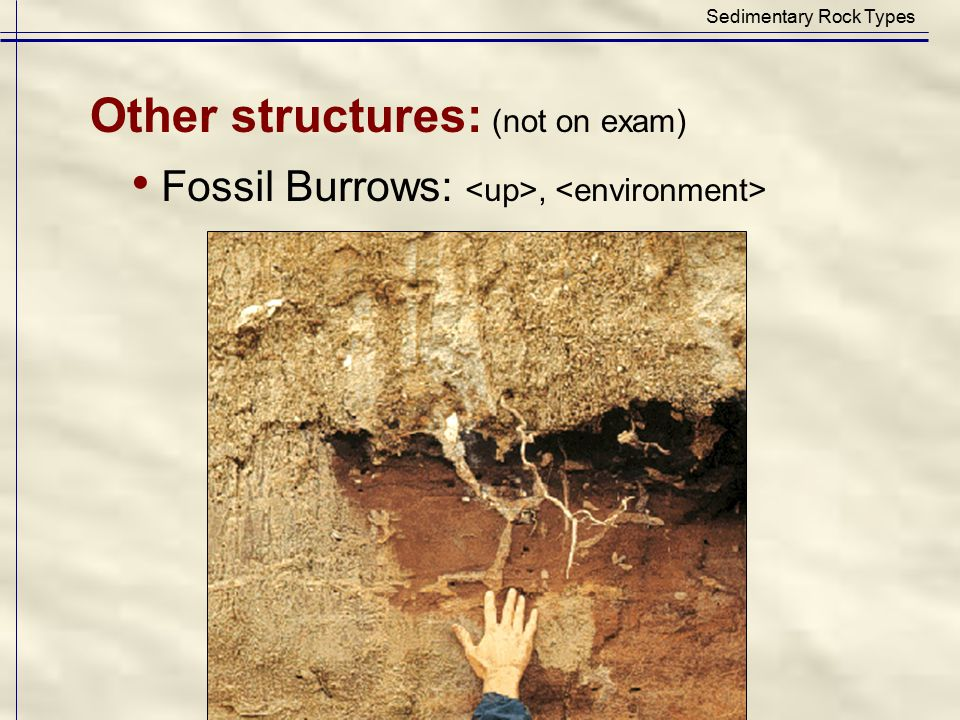 • Fossil Burrows: <up>, <environment>