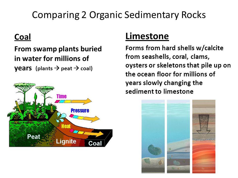 Comparing 2 Organic Sedimentary Rocks