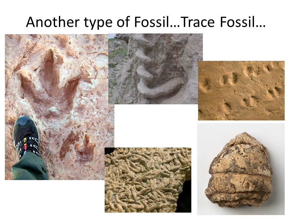 Another type of Fossil…Trace Fossil…
