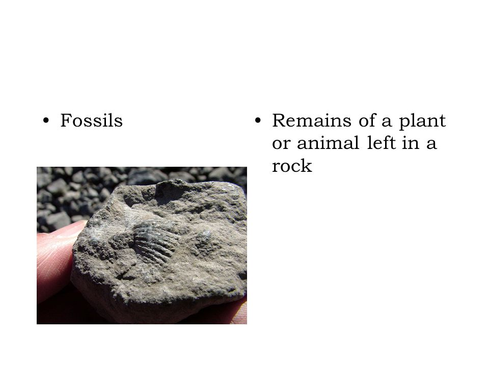 Fossils Remains of a plant or animal left in a rock