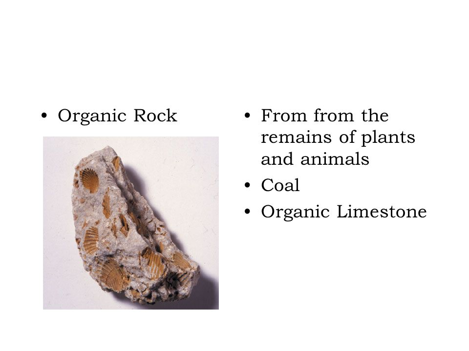 Organic Rock From from the remains of plants and animals Coal Organic Limestone