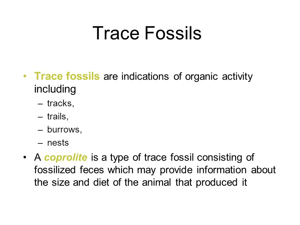 Trace Fossils Trace fossils are indications of organic activity including. tracks, trails, burrows,