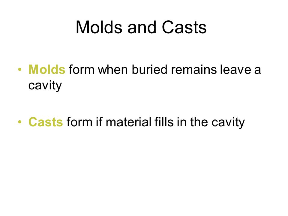 Molds and Casts Molds form when buried remains leave a cavity
