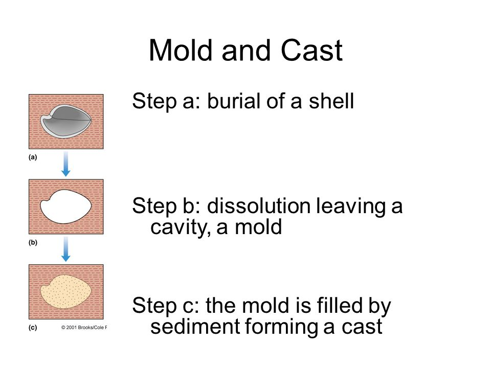 Mold and Cast Step a: burial of a shell