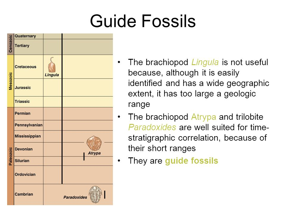 Guide Fossils
