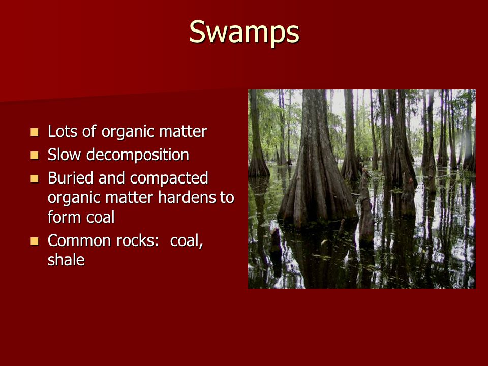 Swamps Lots of organic matter Slow decomposition
