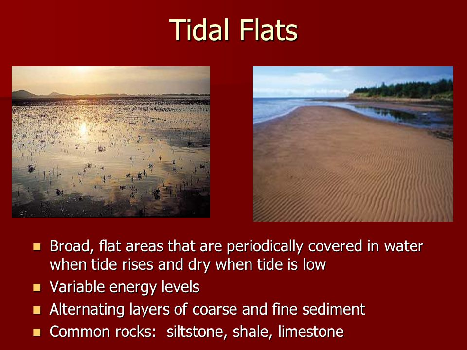 Tidal Flats Broad, flat areas that are periodically covered in water when tide rises and dry when tide is low.