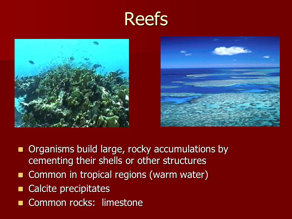 Reefs Organisms build large, rocky accumulations by cementing their shells or other structures. Common in tropical regions (warm water)