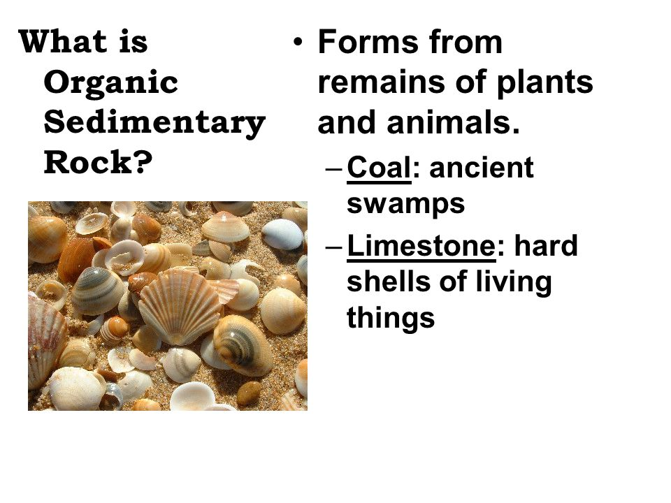 What is Organic Sedimentary Rock
