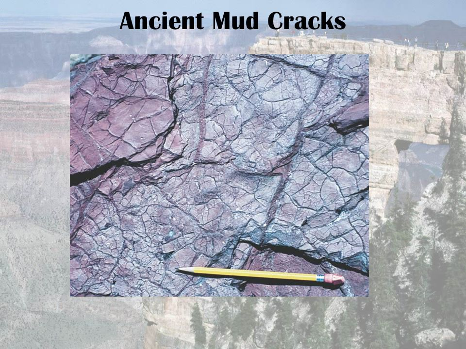 Ancient Mud Cracks