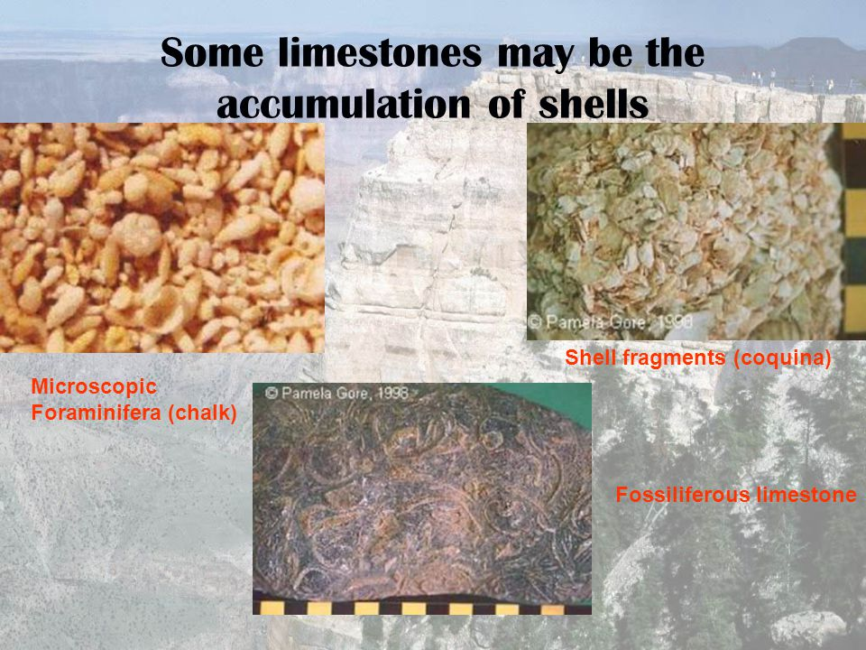 Some limestones may be the accumulation of shells