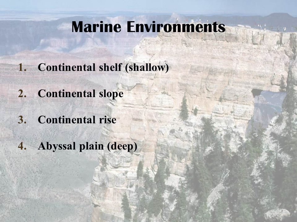 Marine Environments Continental shelf (shallow) Continental slope