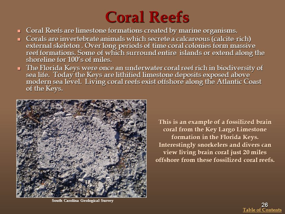 Coral Reefs Coral Reefs are limestone formations created by marine organisms.