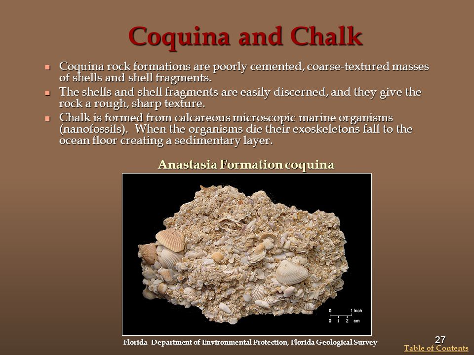 Coquina and Chalk Anastasia Formation coquina