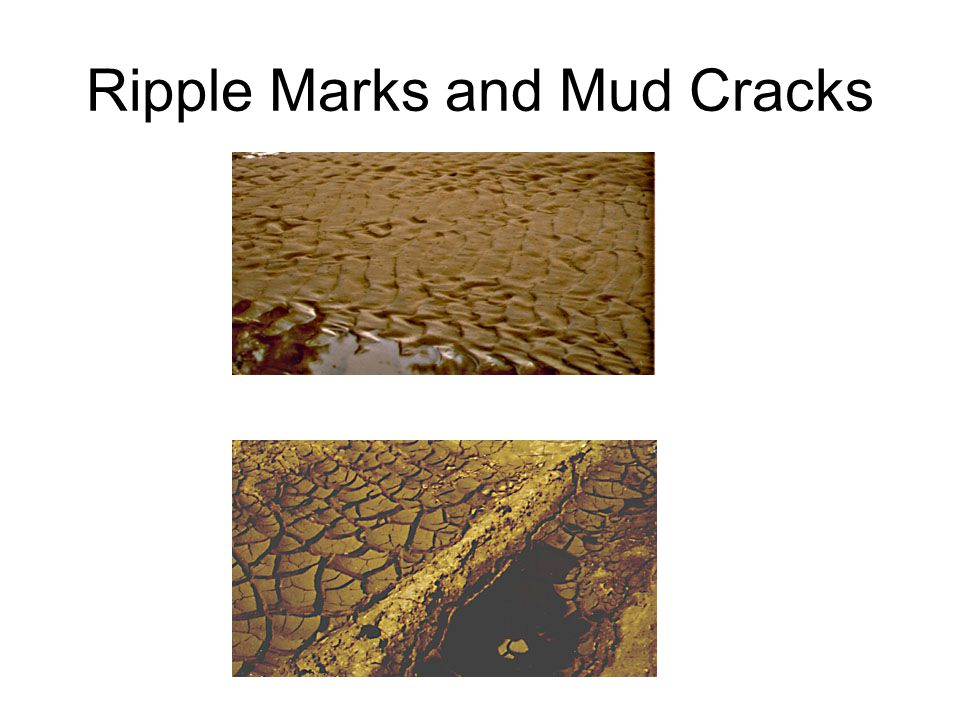 Ripple Marks and Mud Cracks